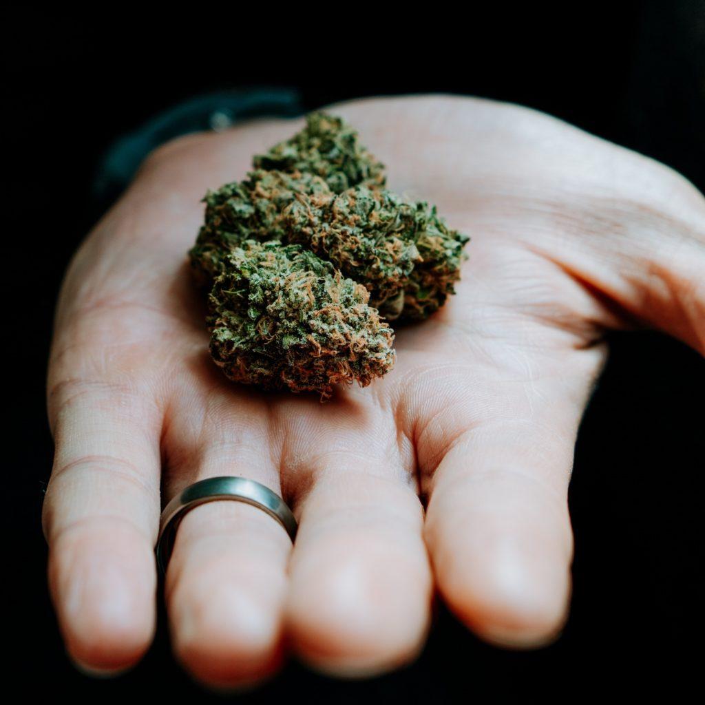 Marihuana lecznicza – jak wygląda